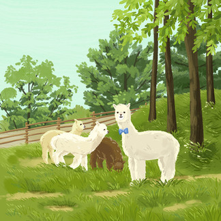 Alpaca world