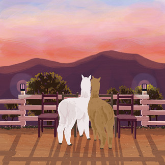 Alpaca's sunset