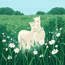 An alpaca couple