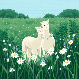 An alpaca couple