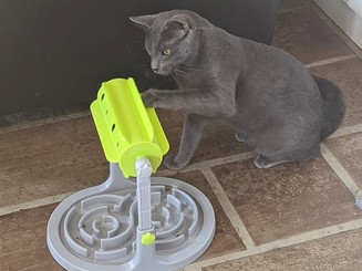 cat with toy 1.jpg