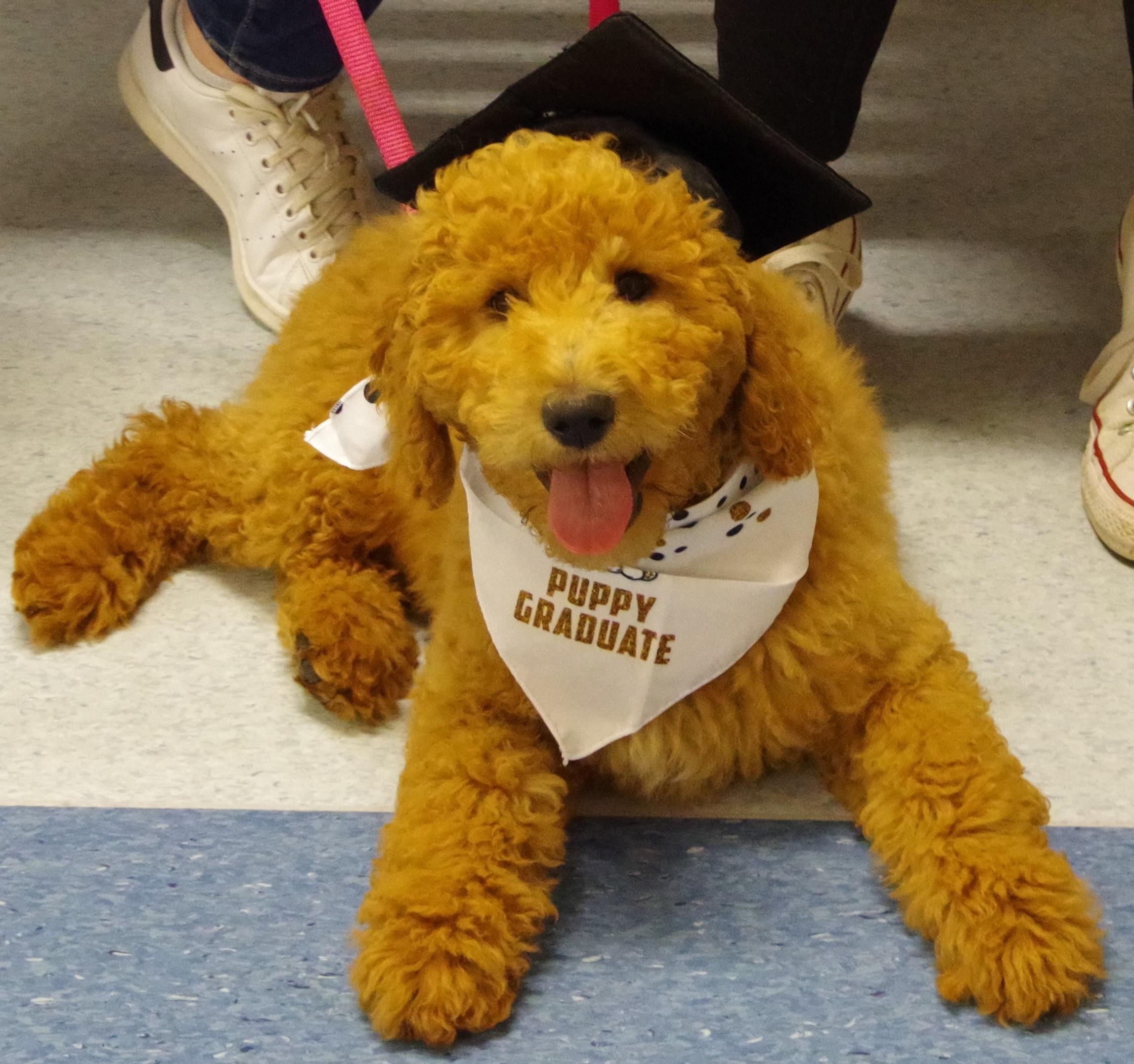 Puppy Preschool Wednesday 6.30PM