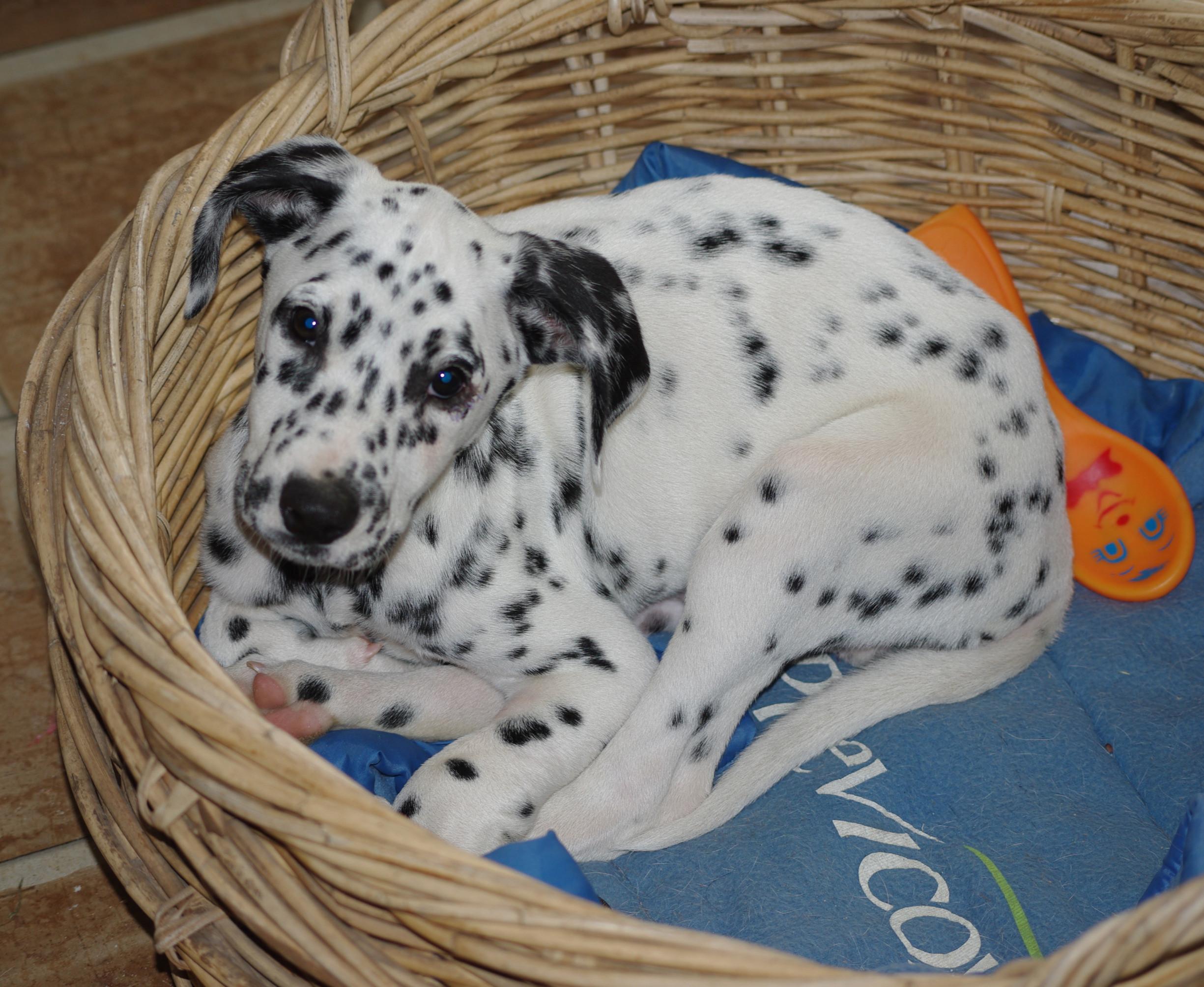 Puppy Primary Sunday 10.15am