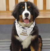 puppy graduate 1.jpg