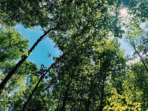 M:treepic:8.1.2020.JPG