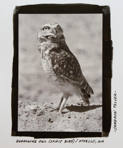 Burrowing Owl (Spirit Bird)
