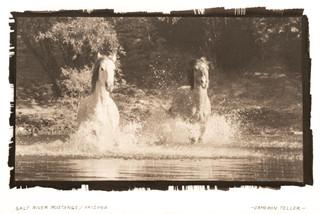 Salt River Mustangs
