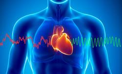 Herz Intelligenz