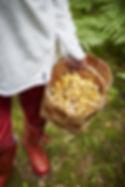 clive_tompsett-picking_mushrooms-5495-mi