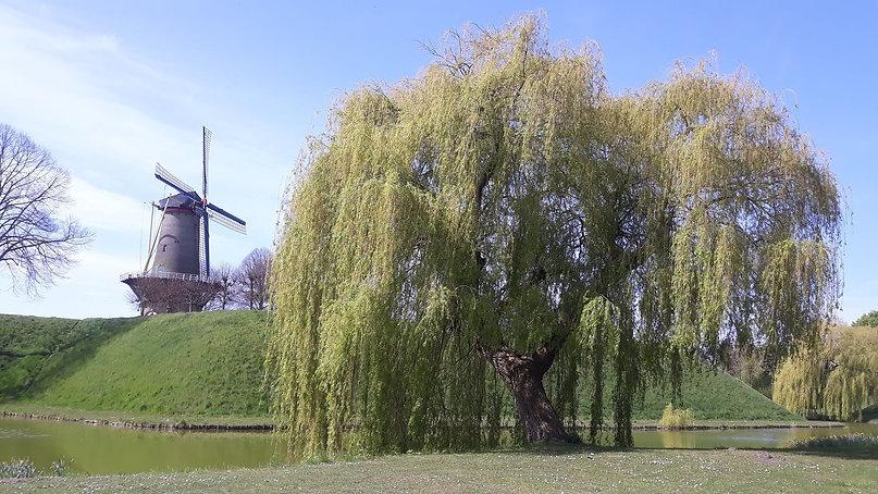 De molen bij Hulst.jpg