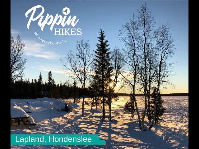 Pippin Hikes, Zweeds Lapland. Met de honden door de nacht. onvergetelijke ervaring! https://www.pippinhikes.nl/lapland