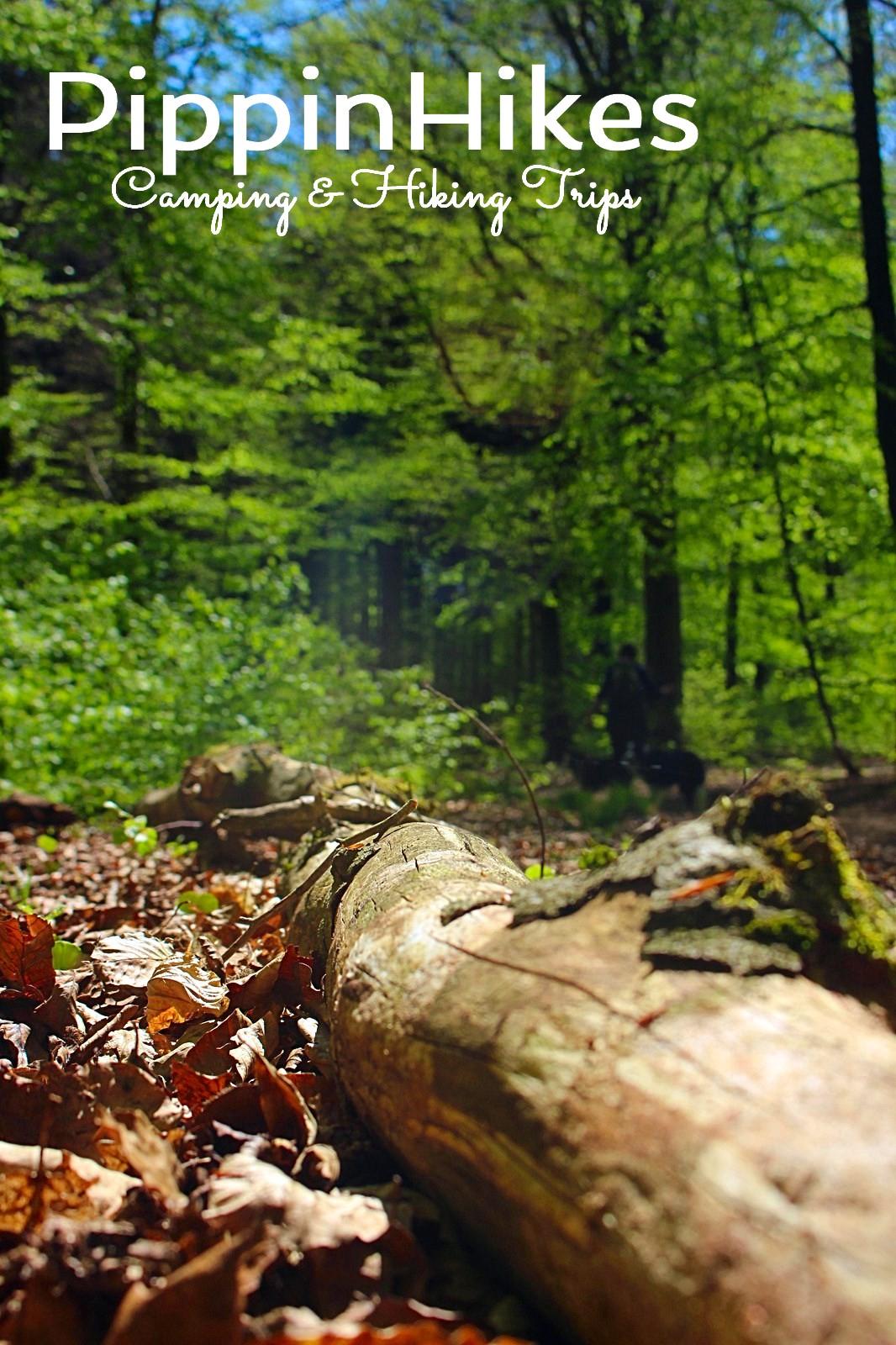 Bossen in de Ardennen