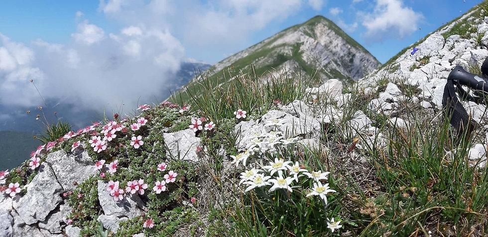 Wandelen in de bergen van Slovenië.jpg