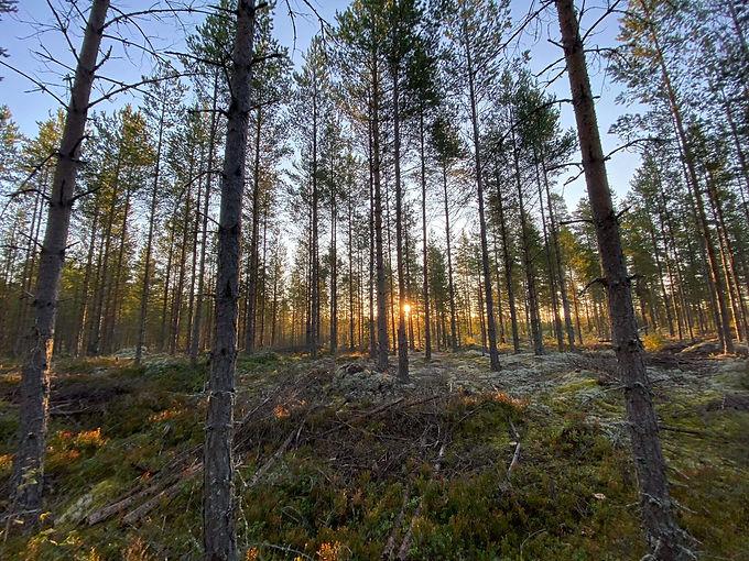 Schitterende bossen.jpg