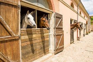 Installations - Ecuries du Château d'Ygrande - équitation Auvergne
