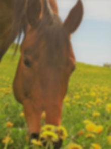 Pferdegestütztes Coachings Lassen Sie sich auf das Erlebnis Pferd ein!