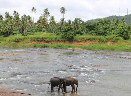 8 Days in Sri Lanka- Hikes, Adventures & More