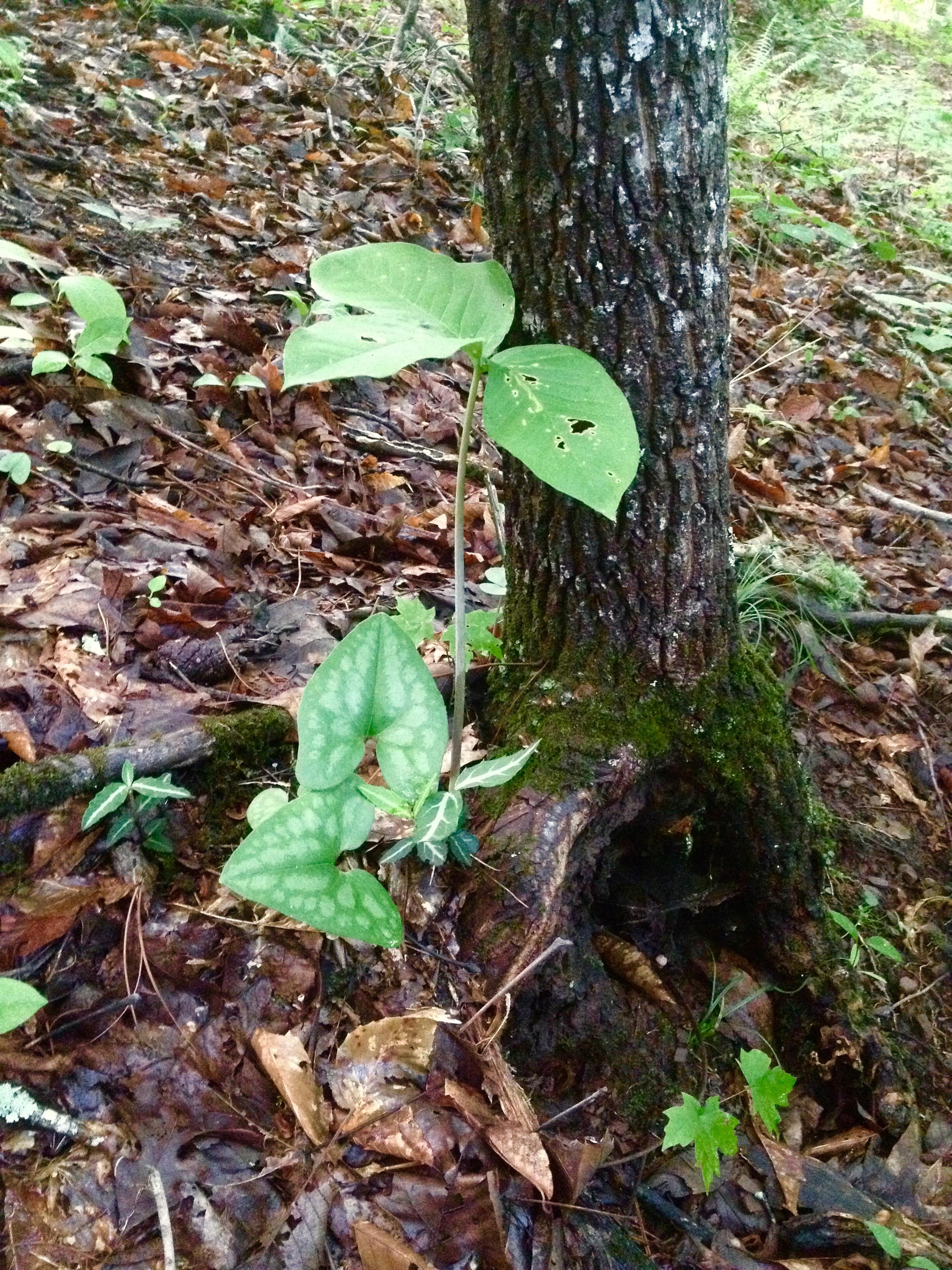 A shady plant community