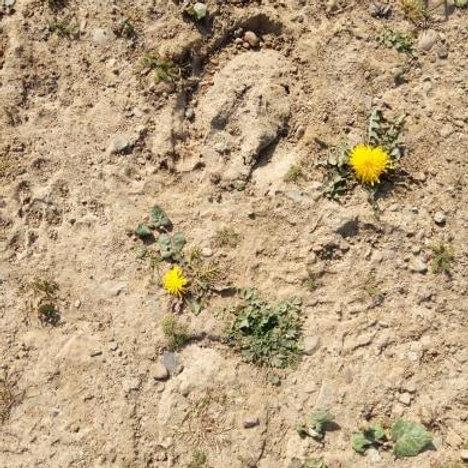Lucky Horse Track Dirt.