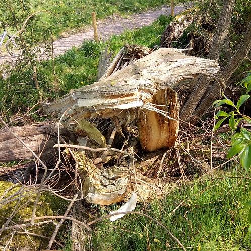 Lightning Struck Wood - power, secrecy, destruction.