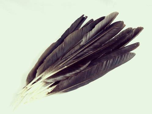 Crow Quill Feathers - altar decoration.