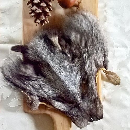 American Fox Face Pelt - trickster spirit.