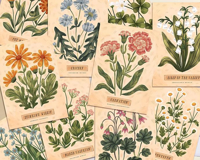 Vintage Botanical Illustrations ~ personalized