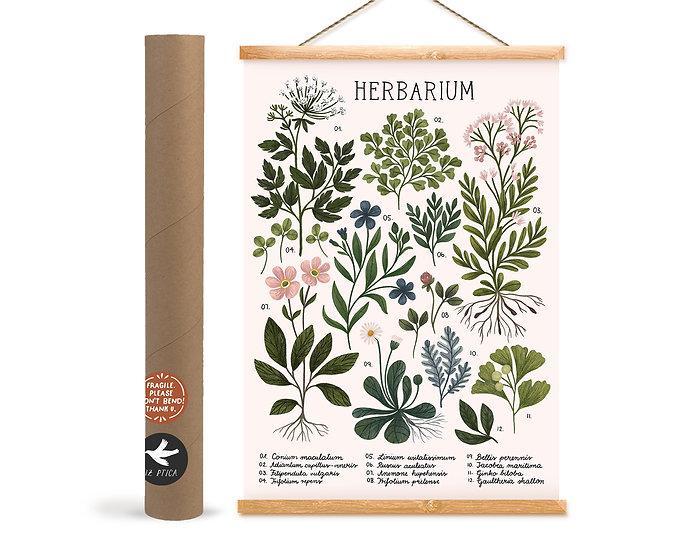 Herbarium ~ white