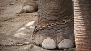 L'éléphant enchaîné, Jorge Bucay