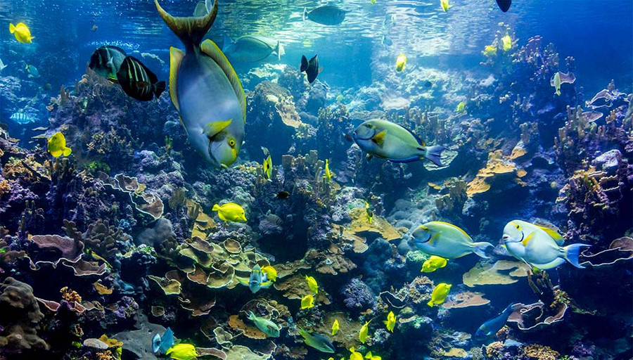 Maui Aquarium, Rich  Hawthorne