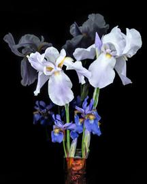 Bob Hempeck - Iris