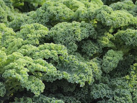 Kale Rice Pilaf