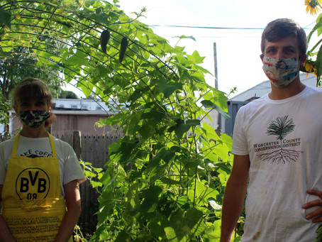 Community Garden Series #1: Service & Justice at the Catholic Worker Garden