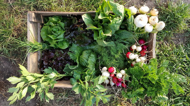 Légumes et plants BIO