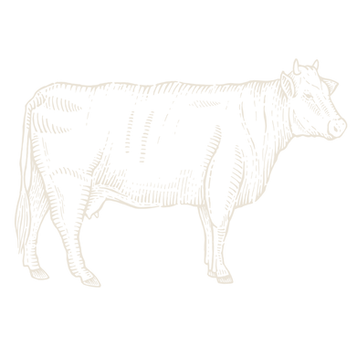 cow_light.png