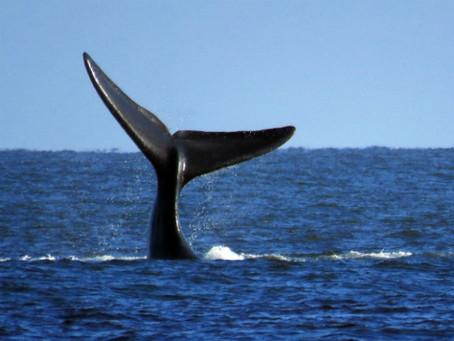 La urgencia y el desafío de proteger a nuestros océanos en una conferencia