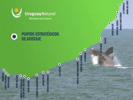 Uruguay: arte y naturaleza en la Ruta de la Ballena Franca