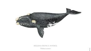 Día Nacional de Protección a la Ballena Franca Austral: ¡Descarga tu arte!