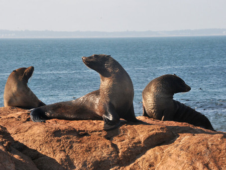 El gobierno se propone declarar el 10% del mar uruguayo como área protegida; serán más de 12.000 km2