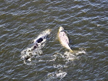 Vuelo para foto ID de ballenas junto a la empresa Fly