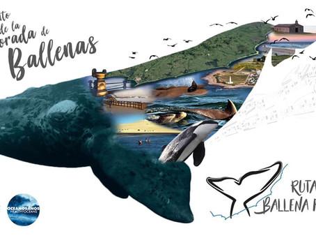 Lanzamiento de la Temporada de Ballenas en Piriápolis y Punta del Este se hará de forma online