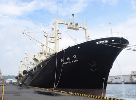 La flota ballenera japonesa en sus aguas jurisdiccionales capturó 124 ballenas de Bryde o ballenas t