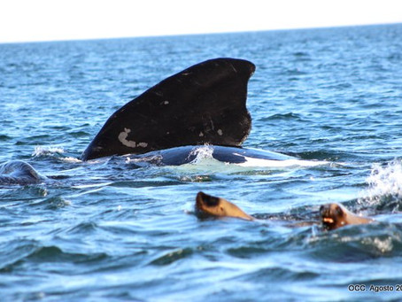 Disfrutar de las ballenas cuidándolas y cuidándonos