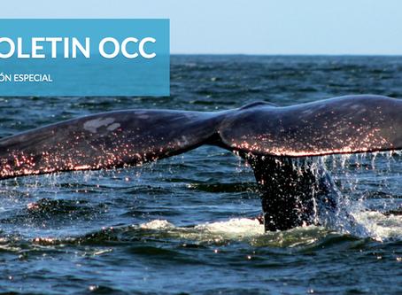 Primera edición del boletín de OCC/Oceanosanos: Ballenas
