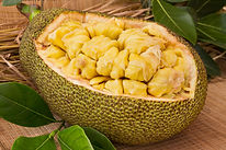 Fresh ripe jackfruit. Fresh sweet jackfr