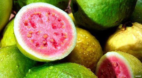 xl_14539_Guava-FDL-TP.jpg