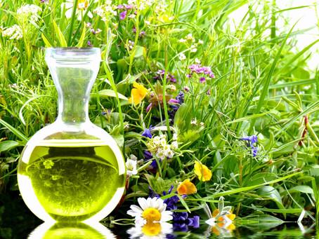 Die Wirkung von Wildkräutern und Heilpflanzen
