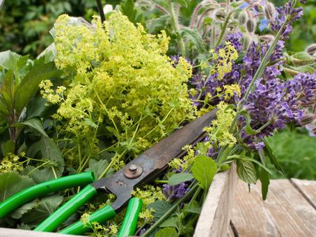 Wildkräuter und Heilpflanzen richtig sammeln