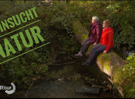 Mit der NDR Nordtour beim Waldbaden