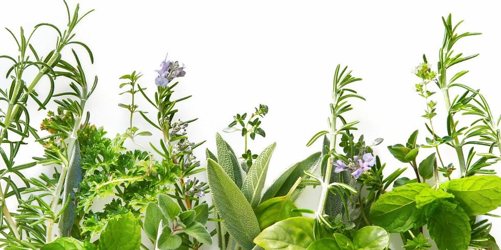 Birkensaft und Brennesseldrops - fit in den Frühling